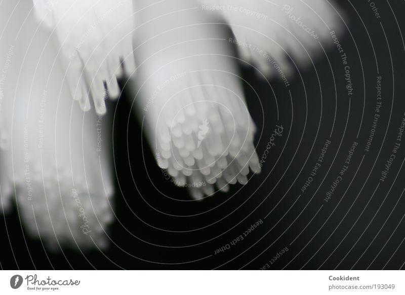 Die Zahnbürste Körperpflege Bad Bürste Kunststoff gebrauchen Reinigen weiß Makroaufnahme Menschenleer Hintergrund neutral Schwache Tiefenschärfe