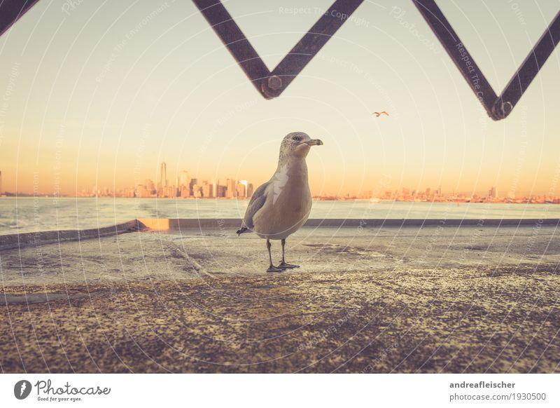 Meins Meins Meins Horizont Schönes Wetter Meer Fluss Stadt Hafenstadt Skyline überbevölkert Hochhaus Sehenswürdigkeit Verkehrsmittel