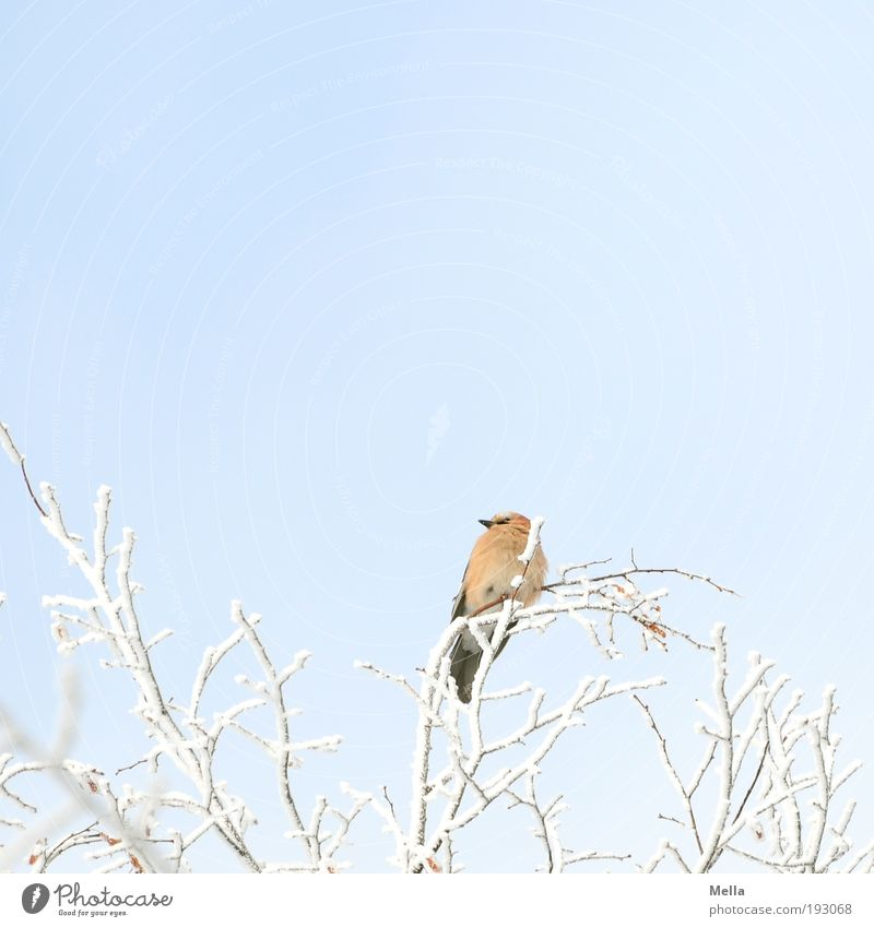 Ausguck Natur weiß Baum blau Pflanze Winter Tier kalt Schnee oben Freiheit Eis hell Vogel Umwelt frei