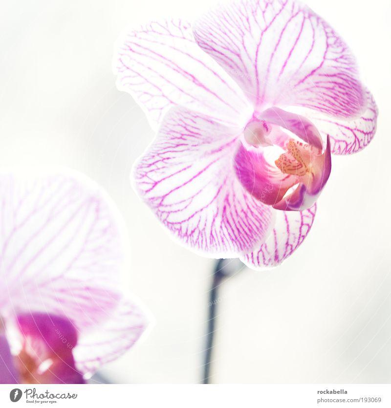 wandbild. schön ruhig Erholung Leben kalt Stil Zufriedenheit elegant ästhetisch einzigartig rein Blume Duft Wohlgefühl harmonisch Orchidee
