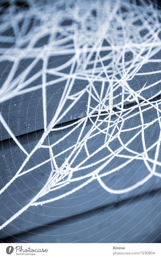 Gespinst Winter Eis Frost Spinnennetz Spinngewebe Holz frieren außergewöhnlich kalt blau weiß bizarr gefroren Raureif spinnen Netz durcheinander Farbfoto