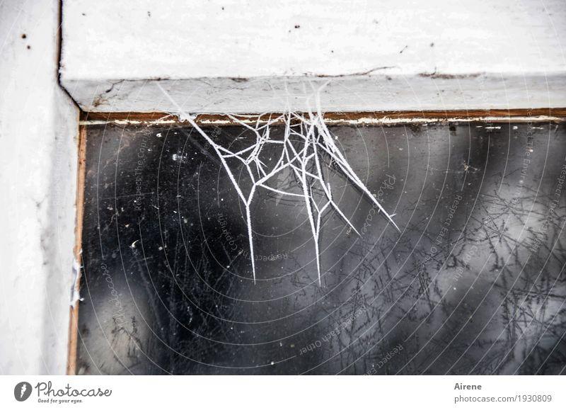 Kampf dem Putzwahn! Häusliches Leben Renovieren Keller Dachboden Fensterrahmen Winter Eis Frost Holz Glas Netz Netzwerk Spinngewebe Spinnennetz frieren alt