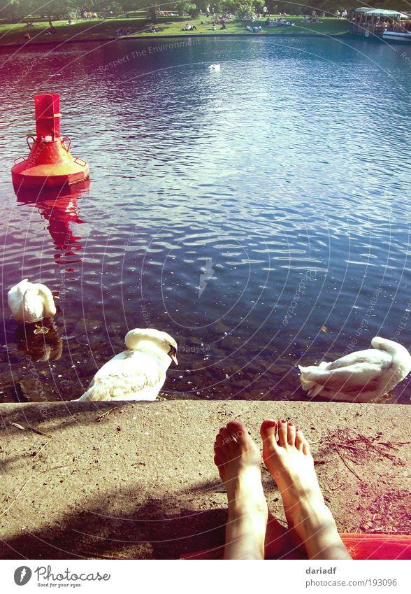 sunny feet Lifestyle Erholung Schwimmen & Baden Städtereise Sommer Sonne Sonnenbad Fuß Park Fluss Berlin Hauptstadt Schwan Wasser genießen liegen Wärme
