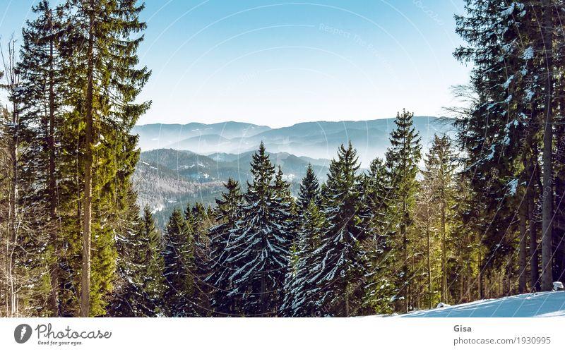 Blick vom Unterberg auf die Voralpen. Schneewandern Skifahren Snowboarding Tourismus Ausflug Winter Landschaft Schönes Wetter Wald Hügel Alpen Berge u. Gebirge