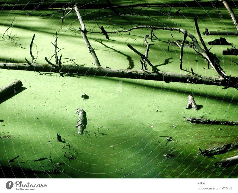 versunken grün Geäst Baum Algen Teich Wasser entengrüze Ast suhle