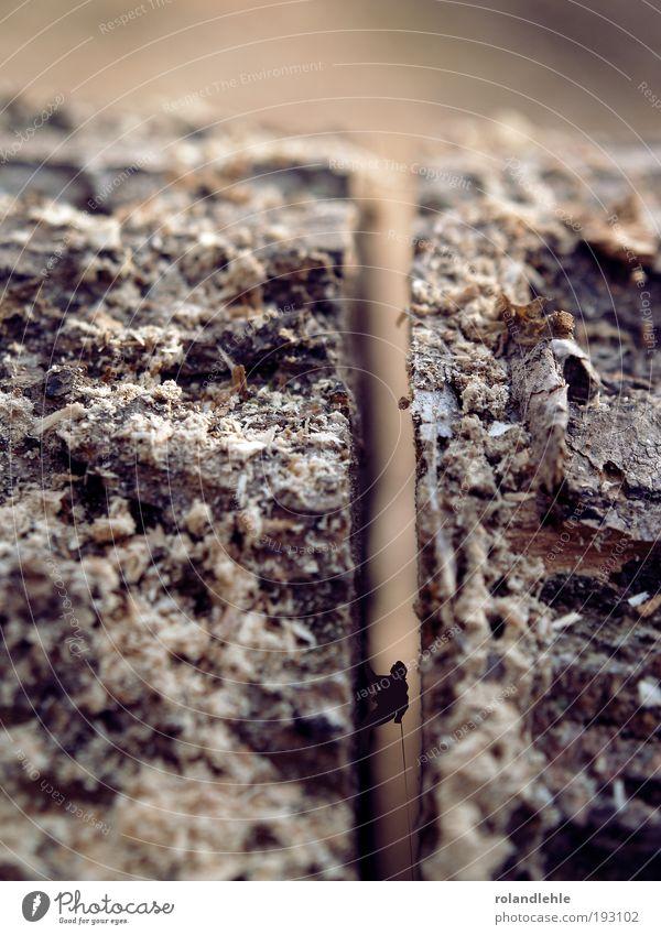Steiler Weg Natur Baum Herbst Holz Urelemente Klettern Makroaufnahme Bergsteigen Pflanze