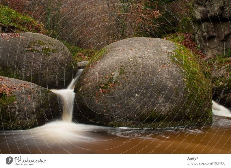 la mare aux sangliers Natur Wasser weiß grün Ferien & Urlaub & Reisen Ferne Herbst Landschaft Stein träumen braun Ausflug Tourismus Frankreich Bach Wasserfall