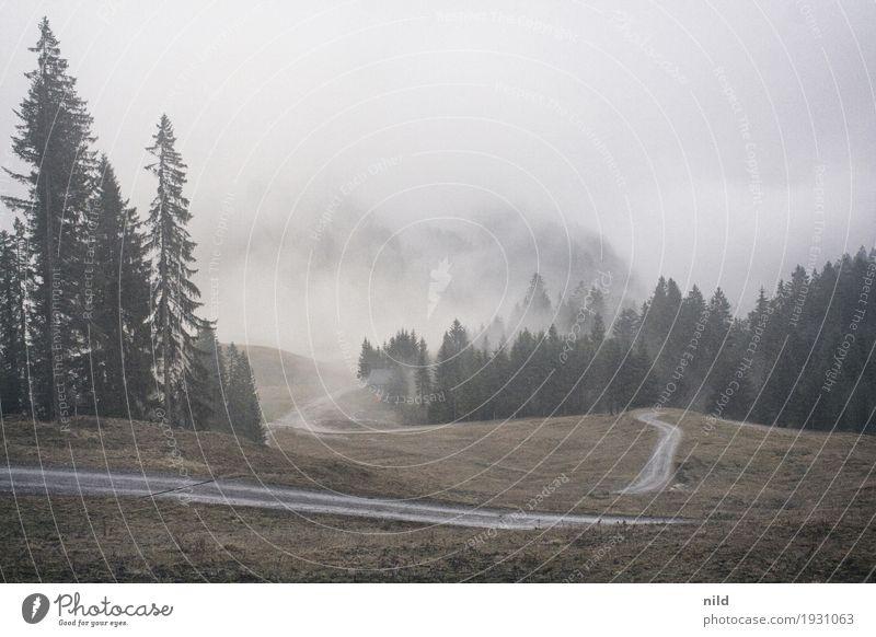 Spätherbst Himmel Natur Ferien & Urlaub & Reisen Pflanze grün Baum Landschaft Erholung Winter Berge u. Gebirge Umwelt kalt Herbst grau Tourismus