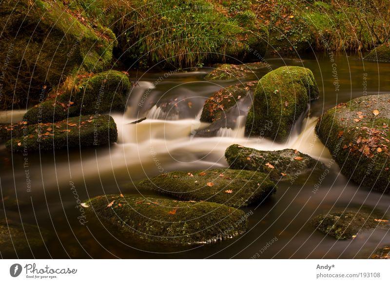 La mare aux fées Natur Wasser weiß grün Pflanze Ferien & Urlaub & Reisen Ferne gelb Herbst Landschaft Gras träumen braun Freizeit & Hobby Ausflug Tourismus