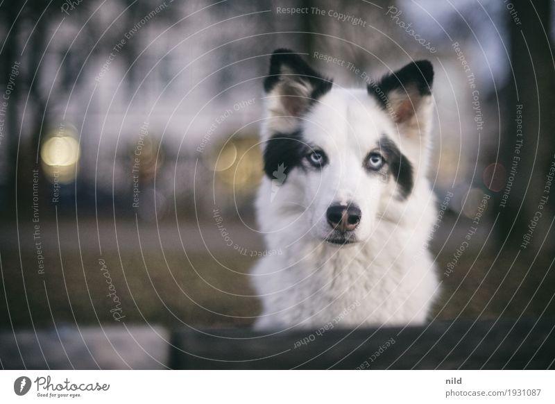 Hello Hund Stadt weiß Haus Tier Lifestyle außergewöhnlich Freizeit & Hobby elegant ästhetisch warten beobachten Neugier Wachsamkeit Haustier achtsam