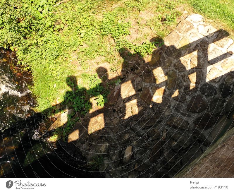 schattig... Mensch Natur Mann Wasser grün Sommer Pflanze schwarz Landschaft Wärme Gras Paar Freundschaft braun Freizeit & Hobby maskulin