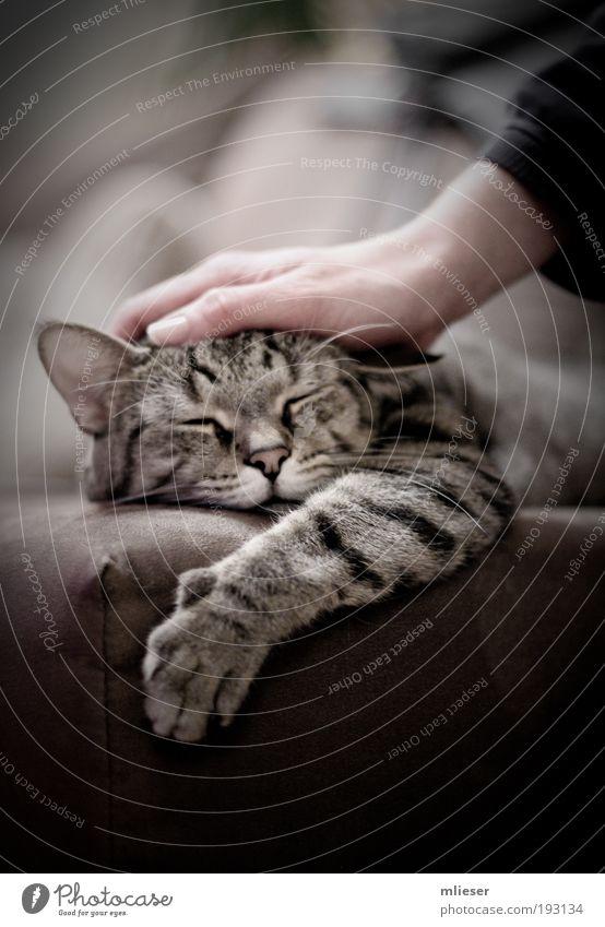 Der kleine Freund Katze Hand schön Tier schwarz Erholung grau Glück Wärme braun Zufriedenheit liegen schlafen weich Ohr