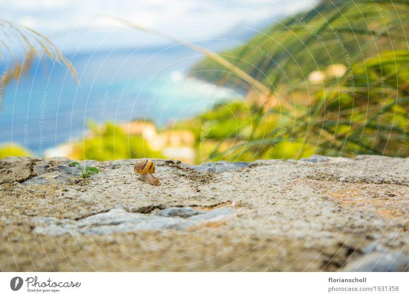 Snail on the rock, Serra de Tramuntana, Palma de Majorca Natur Ferien & Urlaub & Reisen Pflanze Sommer Sonne Landschaft Erholung Tier ruhig Freiheit wandern
