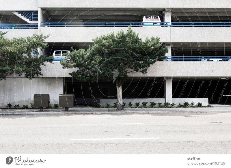 Park ihn, Sohn! Baum Stadt PKW Straßenverkehr Verkehr USA Flughafen Bahnhof Autofahren Schönes Wetter Parkhaus Florida Bauwerk Tampa