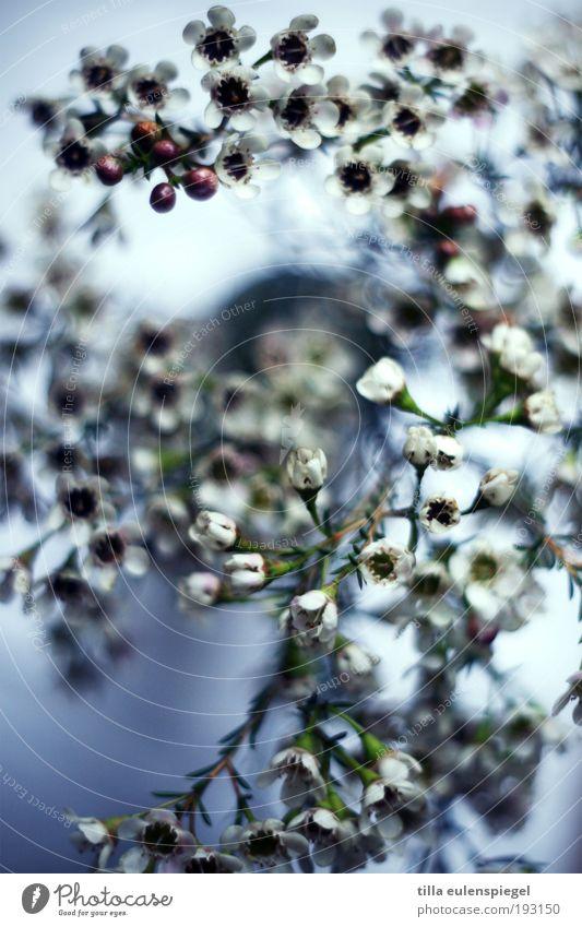dreht sich irgendwie ganz schön Natur schön Blume blau Pflanze Winter kalt Blüte Bewegung elegant ästhetisch Wachstum Dekoration & Verzierung einzigartig wild fantastisch