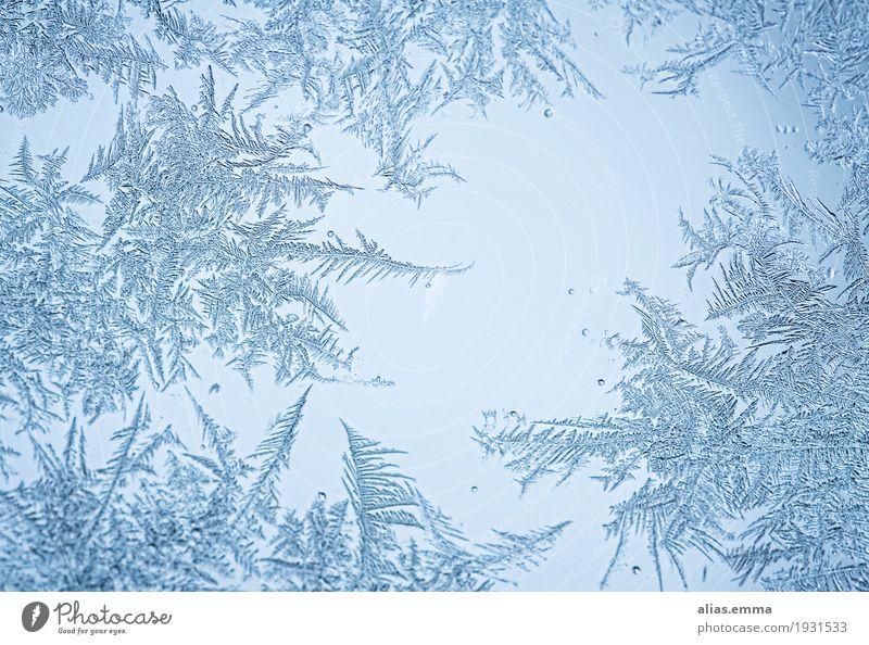 Eiszeit... Eisblumen Eiskristall gefroren Frost filigran Muster federn Kristallstrukturen Schneekristall blau Winter schön Fenster Wunder Wachstum Wasser