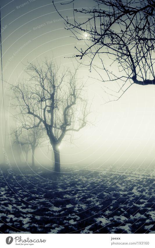 Rendezvous im Mondschein Natur Winter schlechtes Wetter Nebel Eis Frost Schnee Baum Garten Feld alt dunkel gruselig kalt grün Angst ruhig Stimmung Baumreihe
