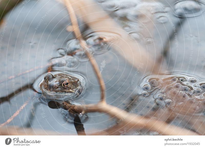 Wachposten Umwelt Natur Pflanze Tier Wasser Frühling Baum Seeufer Teich Wildtier Frosch Schwimmen & Baden sitzen nass schleimig Tapferkeit Sicherheit Schutz