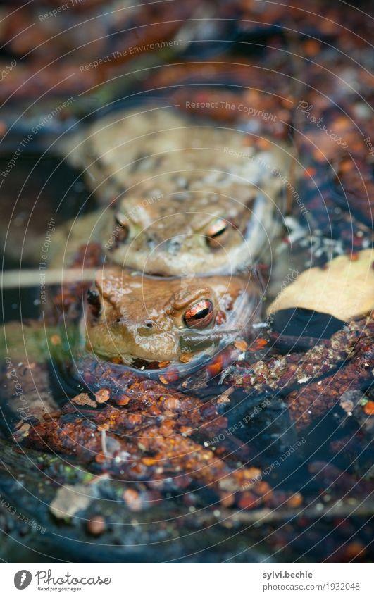 """Zweierschaft"" Natur nackt Pflanze Wasser Tier Umwelt Frühling Schwimmen & Baden See braun Zufriedenheit Tierpaar Wildtier Sex berühren Seeufer"