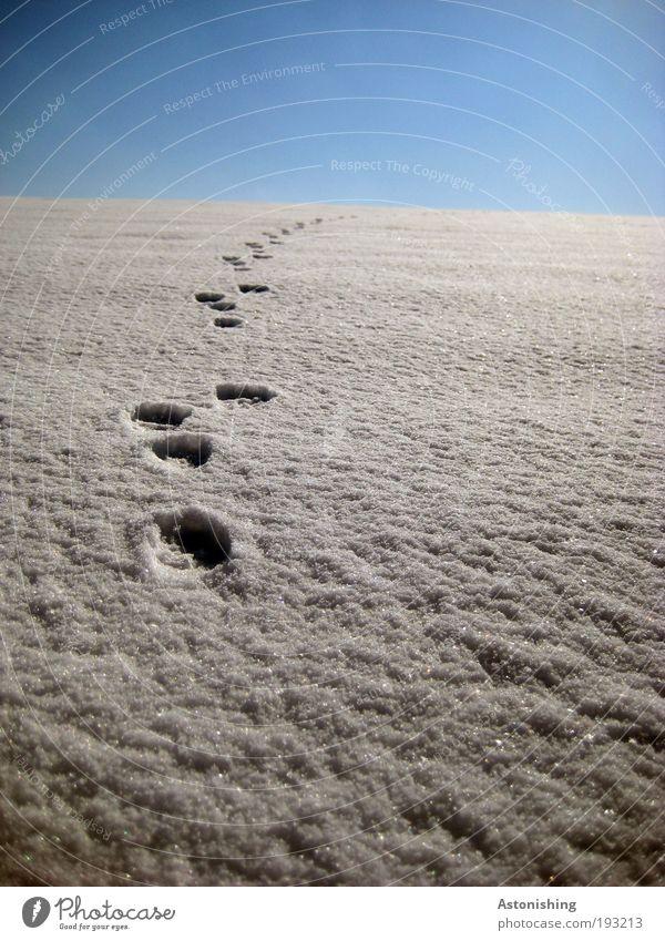 frisch gespurt Umwelt Natur Landschaft Erde Himmel Klima Wetter Schönes Wetter Schnee Wärme Tier Wildtier fallen gehen laufen wandern blau weiß Spuren