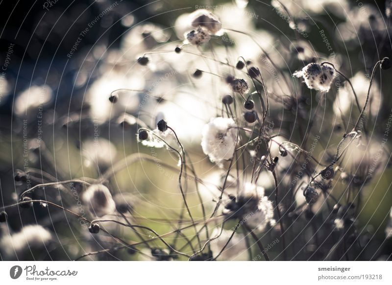 aufblühen Natur weiß Sonne grün Pflanze Sommer ruhig Erholung Blüte Frühling Park Wärme hell Umwelt Sträucher weich