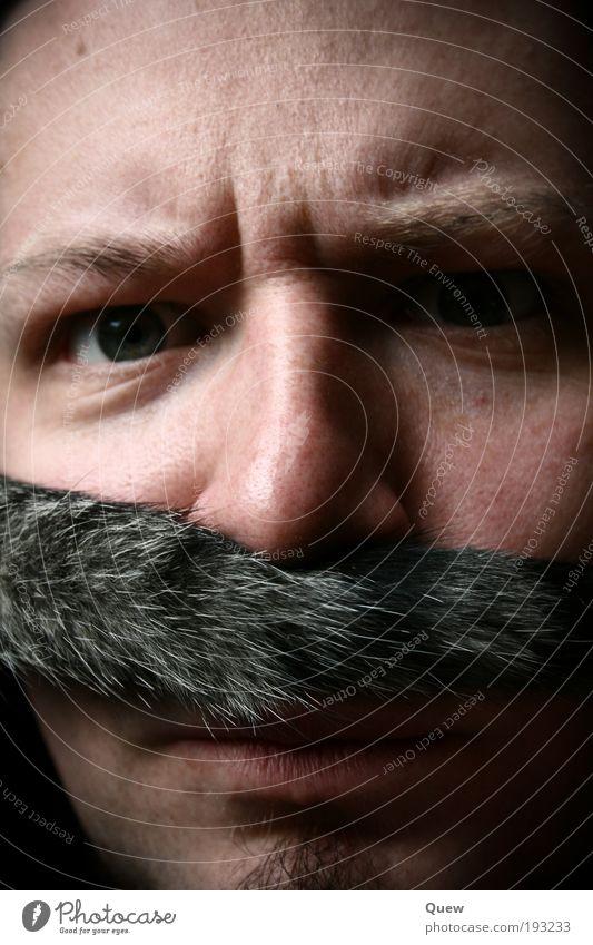 Luigi ist sauer Mensch maskulin Mann Erwachsene Haut Gesicht 1 Fell Bart Oberlippenbart Behaarung Katze Wut Katzenschwanz grimmig Farbfoto Innenaufnahme