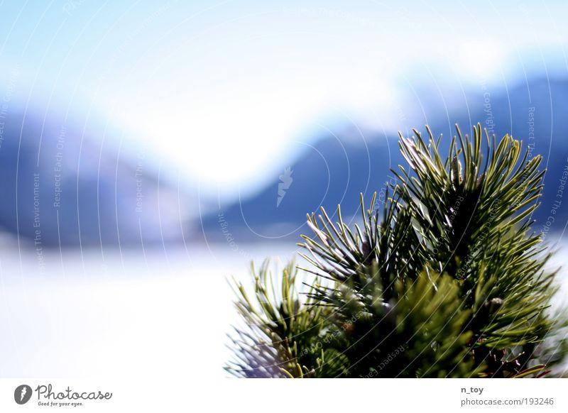 winter ends Natur Wasser Baum Winter ruhig Schnee Erholung Berge u. Gebirge träumen See Landschaft Eis Hoffnung Frost Sträucher beobachten