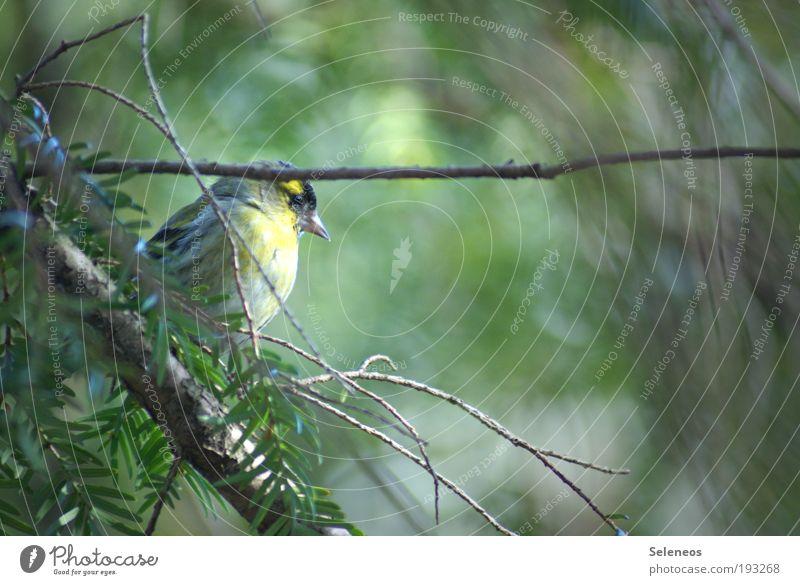 Eckdaten Natur Baum Pflanze Blatt ruhig Tier Umwelt Landschaft Garten Park Vogel wild Klima Flügel beobachten Tiergesicht