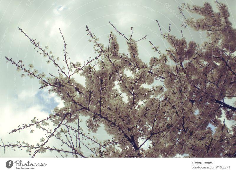 Himmel Natur Baum Pflanze Freude Blatt Wolken Frühling Luft träumen Park
