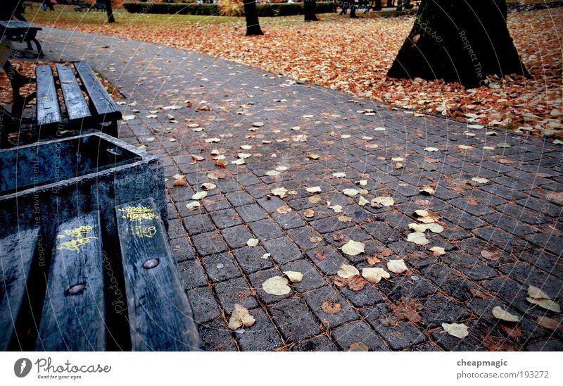 Natur Pflanze Blatt Herbst Straße Stimmung Park Geborgenheit