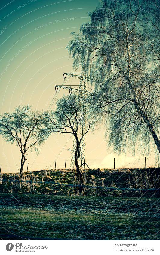 Baum, Baum, Strom, Baum Energiewirtschaft Strommast Hochspannungsleitung Wolkenloser Himmel Natur Außenaufnahme Abend