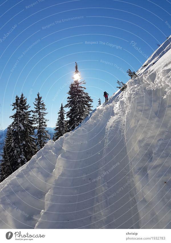 auf Spur Freizeit & Hobby Skitour Abenteuer Freiheit Sonne Winter Schnee Natur Landschaft Himmel Wolkenloser Himmel Sonnenlicht Schönes Wetter Baum Erholung