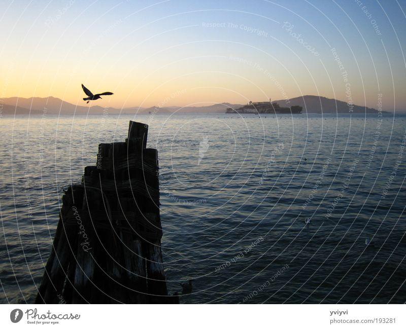 Alcatraz Natur Tier Stimmung Vogel Optimismus Zentralperspektive