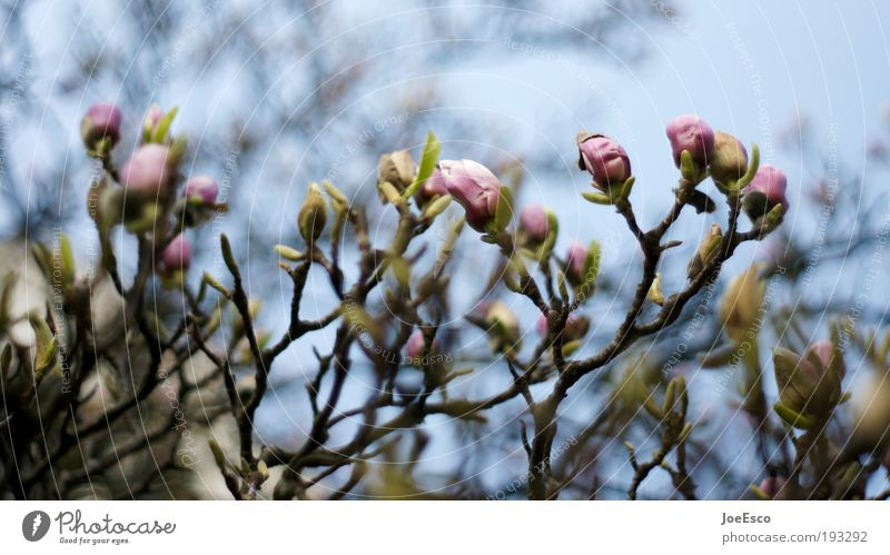 frühlingsgefühle... schön Himmel Baum Pflanze Blatt Blüte Frühling Park Wachstum Kitsch Blühend Gartenarbeit Frühlingsgefühle Pfingstrose