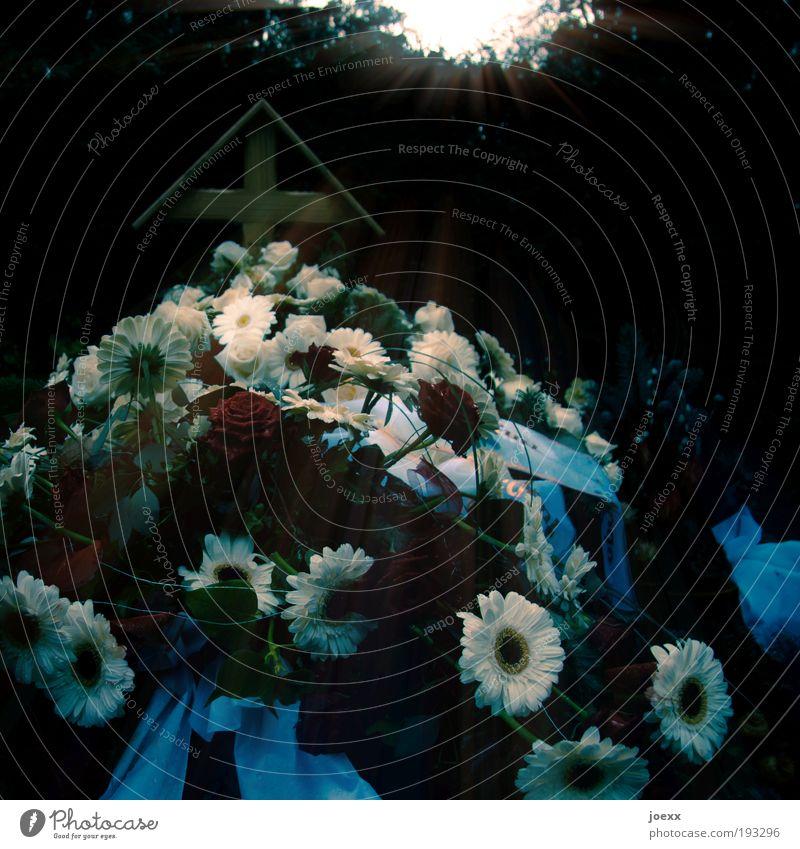 Du fehlst Blume Traurigkeit alt Gefühle Mitgefühl Hoffnung Glaube Angst Trauer Frieden Grab Grabschmuck Blumenkranz Kreuz Beerdigung Tod Ende Friedhof Farbfoto