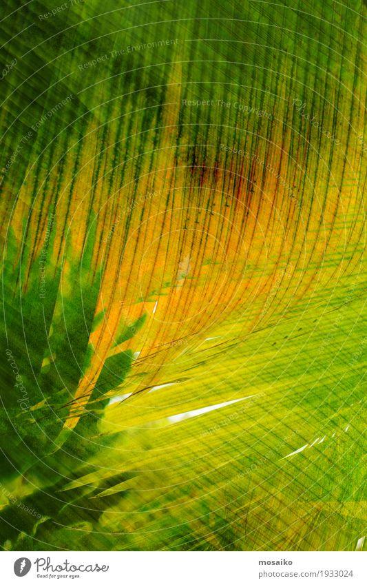 Texturen von tropischen Pflanzen Stil Design Kunst Natur Blatt Streifen modern gelb grün Farbe Material Oberfläche vertikal Geometrie Grafik u. Illustration