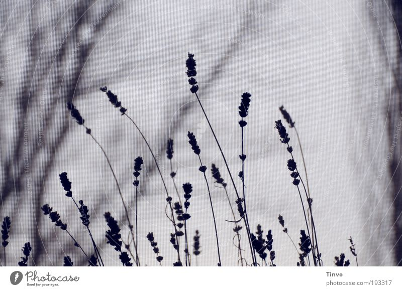 warten... (2) Natur Baum Pflanze Einsamkeit dunkel kalt Traurigkeit Trauer trist Sträucher Vergänglichkeit geheimnisvoll Lavendel Zweige u. Äste Unlust Heilpflanzen