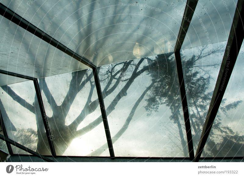 Überdachter Fahrradstand Baum Glas Wetter Dach Schutz Ast Regenschirm Wetterschutz Sonnenschirm Baumstamm Schirm Zweig Natur Gebäude Acryl Glasdach