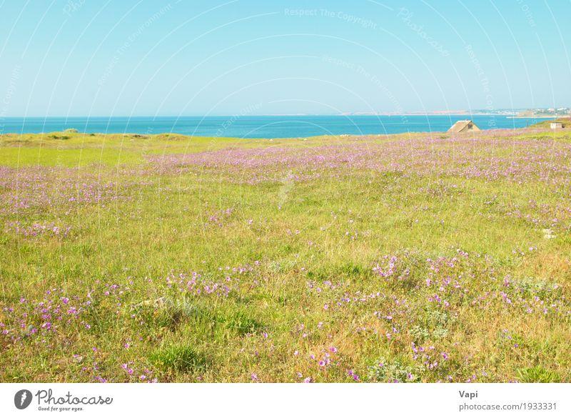 Grünes Gras auf dem Feld mit Blumen Himmel Natur Pflanze blau Sommer Farbe grün Wasser weiß Landschaft Umwelt gelb Frühling Wiese natürlich