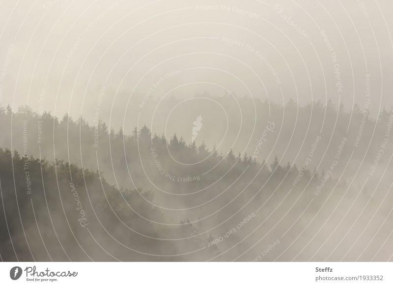 Nebelwelten Umwelt Natur Landschaft Luft Klima Klimawandel Wetter Baum Baumkrone Wald Hügel schön grau Stimmung ruhig Sehnsucht Lichtstimmung Nebelstimmung