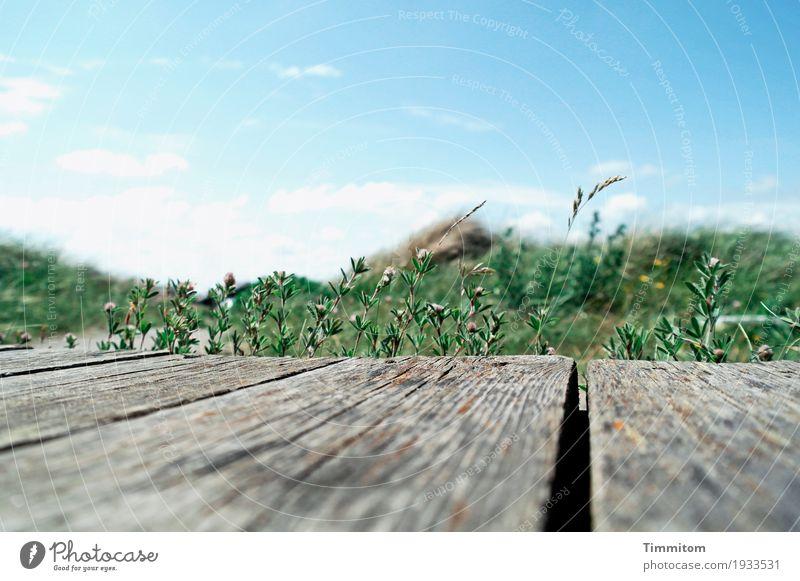 Zart keimende Vorfreude. Ferien & Urlaub & Reisen Umwelt Natur Pflanze Himmel Wolken Schönes Wetter Dänemark Terrasse Wege & Pfade Holz blau grau grün weiß