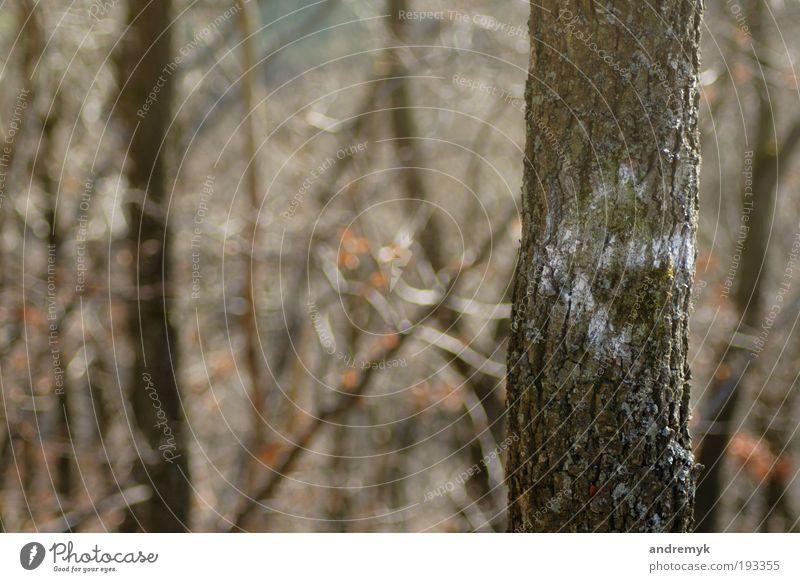 nach links ... Natur Baum Pflanze Wald Landschaft Wetter Umwelt Perspektive trist Politik & Staat Tag vernünftig Wildpflanze