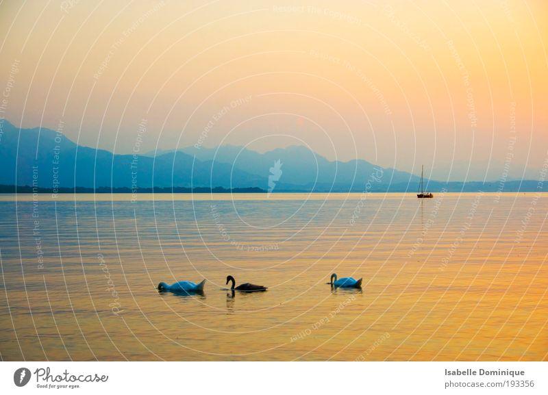 Natur Wasser blau Sommer Tier gelb Ferne Farbe Erholung Berge u. Gebirge See Landschaft Zufriedenheit rosa Nebel elegant