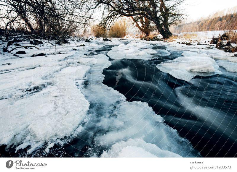 Eisbach Umwelt Natur Landschaft Pflanze Wasser Winter Schönes Wetter Frost Schnee Bach Fluss ästhetisch natürlich wild blau weiß Rauschen Strömung Farbfoto
