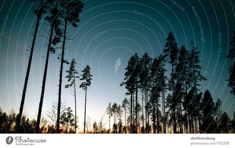 zwielichtige Angelegenheit Natur Pflanze Himmel Sonnenlicht Winter Baum Wald blau ruhig Farbfoto Außenaufnahme Menschenleer Textfreiraum rechts