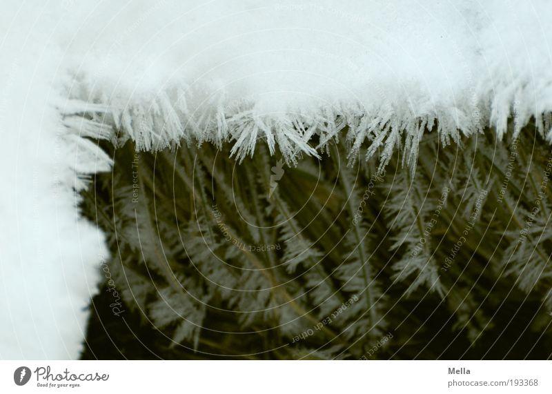 Rahmenbedingungen Umwelt Natur Winter Klima Klimawandel Eis Frost Schnee Kristalle kalt natürlich Ecke eingerahmt umrandet mehrschichtig Niveau Eiskristall