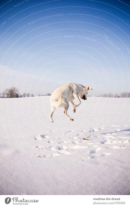 Häschen Hüpf Hund Natur Baum Tier Winter Umwelt Landschaft Wiese kalt Schnee Bewegung springen Horizont Eis Feld Energie