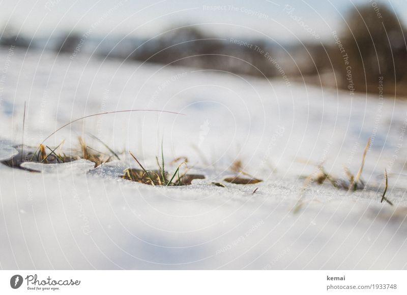 Reste II Freiheit Umwelt Natur Pflanze Frühling Winter Schönes Wetter Eis Frost Schnee Gras Grünpflanze Wiese Wachstum authentisch hell natürlich tauen