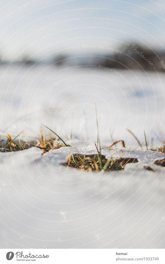 Reste III Freiheit Umwelt Natur Pflanze Himmel Frühling Winter Schönes Wetter Eis Frost Schnee Gras Grünpflanze Wiese Wachstum authentisch frisch heiß natürlich