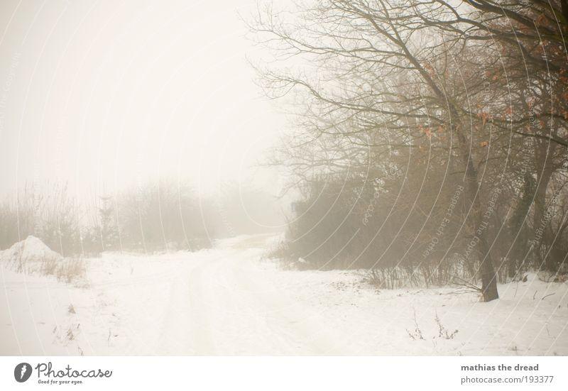 NEBEL Umwelt Natur Landschaft Himmel Horizont Winter schlechtes Wetter Nebel Schnee Pflanze Baum Sträucher Park Wiese Feld dunkel gruselig kalt schön Einsamkeit